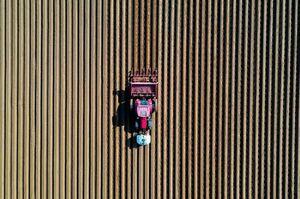 تصویر هوایی از زمین کاشت سیب زمینی