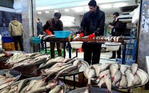 روحانی از قیمت ماهی و میگو خبر داره؟