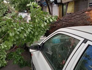 عکس/ سقوط درخت بر روی پراید