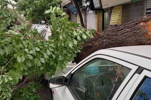 فیلم/ لحظه سقوط درخت روی پژو پارس