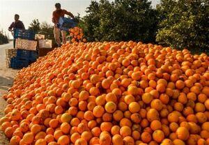 مقصر فساد هزاران تن میوه شب عید کیست؟