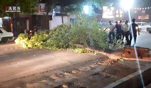 فیلم/ خسارت طوفان به درختان و خودروهای عبوری در یزد