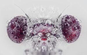 تصویر زیبا از قطرات شبنم بر روی یک حشره