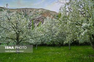 عکس/ طبیعت بکر شمال استان قزوین