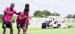 فیلم/ ورود تمساح به زمین تمرین فوتبال