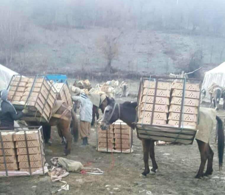 قاچاق ماهانه ۸.۹ میلیون قطعه جوجه یکروزه