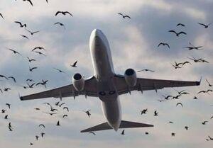 پرنده روی بال هواپیما+ فیلم