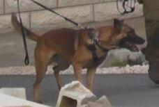 صحنه شگفت انگیز حمله سگ اسرائیلی به جوان نمازگزار فلسطینی+ فیلم