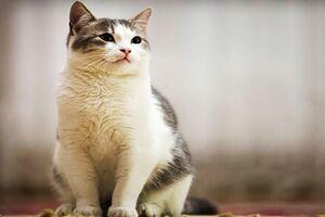 چشمکزدن یک گربه شنی در دل کویر +فیلم