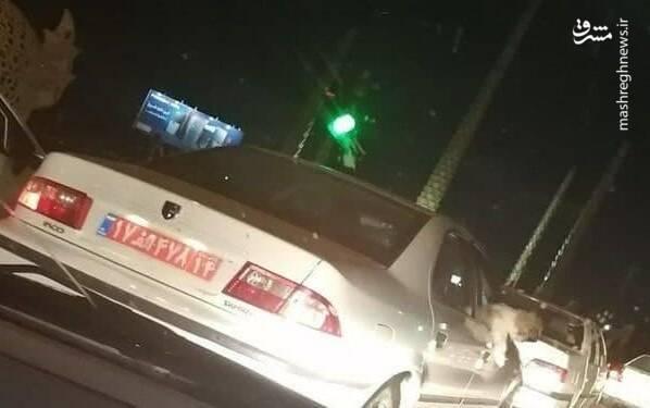 برکناری یک مدیر دولتی به دلیل سگگردانی