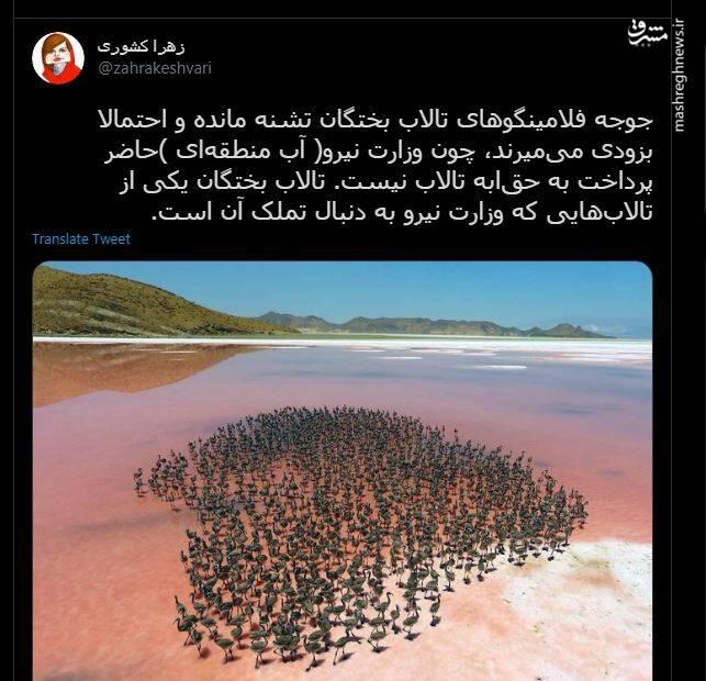 ماجرای وزارت نیرو و مرگ فلامینگوهای تالاب بختگان!