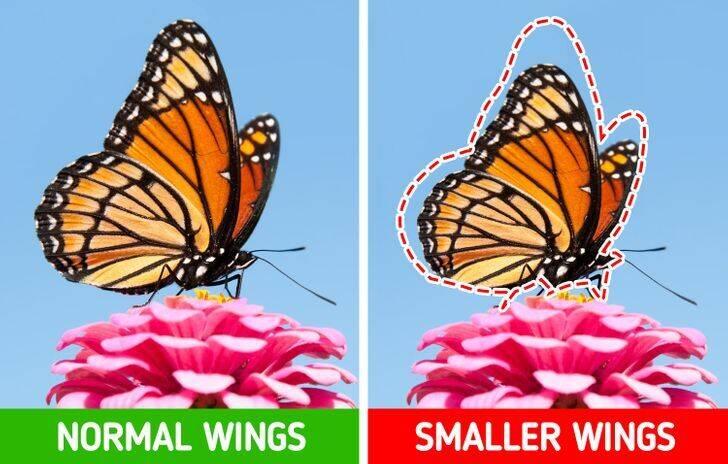 چرا هر چه میگذرد حیوانات کوچکتر میشوند؟