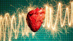 چرا حیوانات دچار حمله قلبی نمیشوند؟