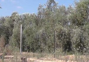 فیلم/ استتار جالب سامانه موشکی فلسطینیها