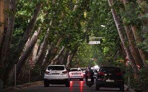 درختان درهم تنیده یکی از خیابانهای اصفهان