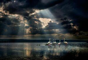 عکس/ خلیج زیبای فلامینگوها