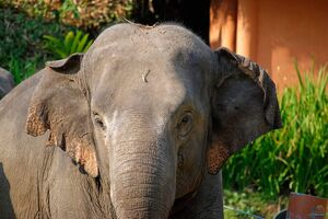 فیلم/ لحظه نفسگیر نجات یک فیل