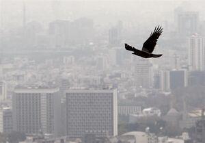 «شیب ملایم» افزایش نرخ اجارهبها در تهران