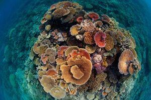 عکس/ درخشش مرجانها در اعماق آب