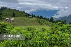 عکس/ سفر به ارتفاعات «ماسال»