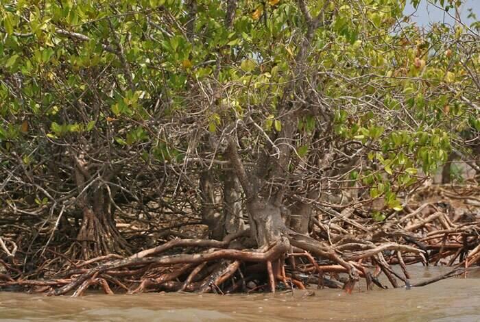 با مرگبارترین درختان دنیا آشنا شوید