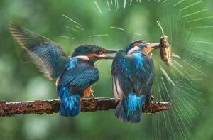 عکس/ لحظه زیبای شکار ماهی