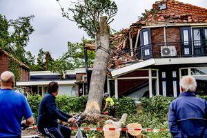 عکس/ سقوط درختان بر روی خانهها در هلند