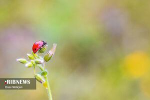 عکس/ گلهای وحشی بهاری در طبیعت مازندران