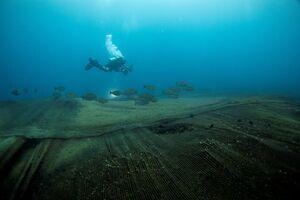 عکس/ تورهای ماهیگیری در کف دریا