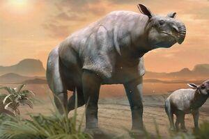 کشف بقایای کرگدن عظیمالجثه ۲۲میلیونساله +عکس