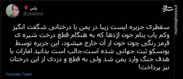 سرقت خون اژدها از یمن توسط امارات+ عکس