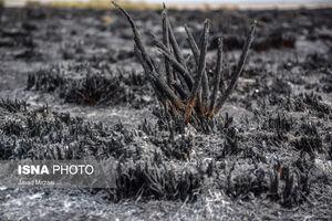عکس/ آثار آتشسوزی تالاب میانکاله در مازندران
