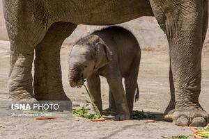 """عکس/ رونمایی از """"مایسا"""" در باغ وحش ارم"""