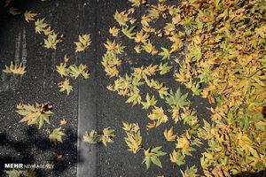 برگریزان پاییزی در تابستان