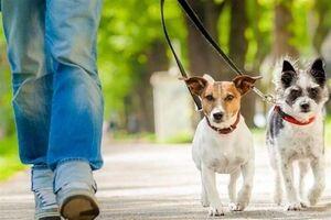 قوانین نگهداری سگ در چند کشور+ فیلم