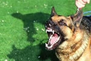 فیلم/ سرگردانی قوانین سگ گردانی