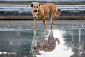 ۱۵ آمار جالب درباره ی گازگرفتن سگ ها در آمریکا