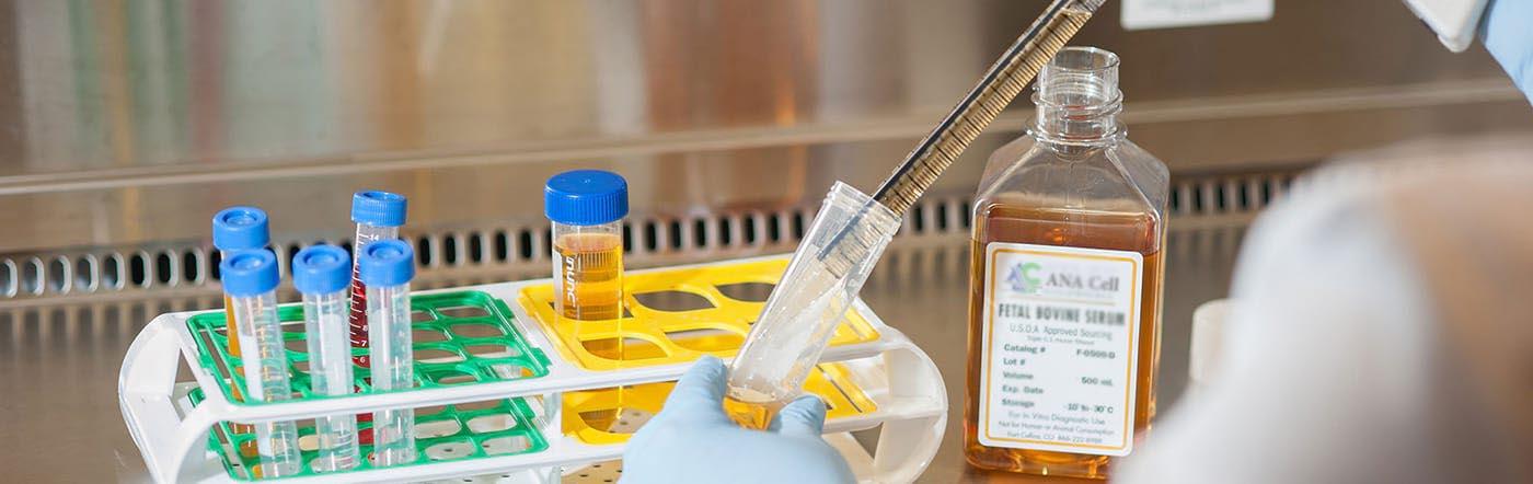 تولید سرم جنین گاوی در شرکت آنا سلول طب