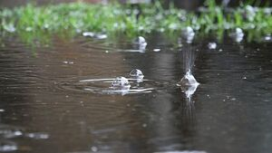 بارش باران در گرمای تابستانی + فیلم
