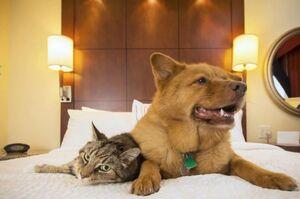 موانع قانونی نگهداری حیوانات در آپارتمان