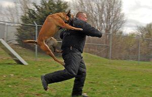هنگام حمله سگها چکار کنیم؟