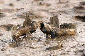 تصویر باورنکردنی از جنگ دو ماهی