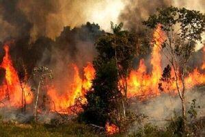 دود آتش سوزی احتمال ابتلا به کووید ۱۹ را افزایش می دهد