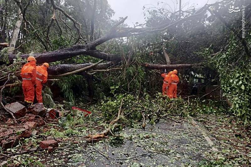 وزش باد شدید و قطع درختان در گوآ هند