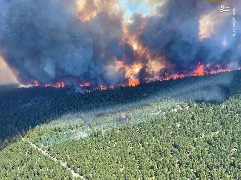 آتش سوزی در جنگل های کانادا براثر گرمای شدید هوا