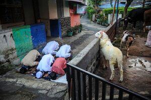 عکس/ برگزاری نماز عید قربان به صورت گروههای کوچک