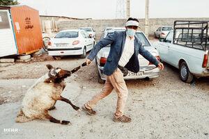 عکس/ بازار فروش دام در آستانه عید قربان