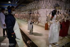 عرضه گوشت طیور در بهار امسال افزایش یافت