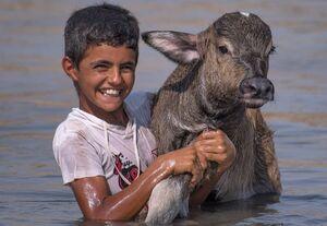 دمیدن روح دوباره در هورالعظیم با افزایش رهاسازی آب