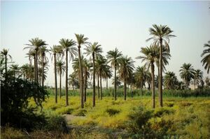 خوزستان، رسانه و حال این روزها